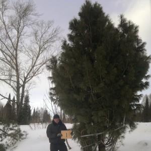 Сибирский питомник